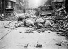 Horses lying dead beneath building rubble.